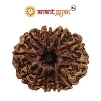 11 Mukhi Rudraksha Anant Gyan