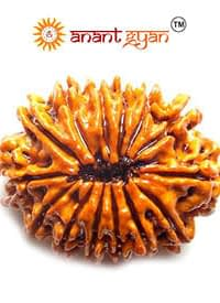 14 Mukhi Rudraksha Anant Gyan